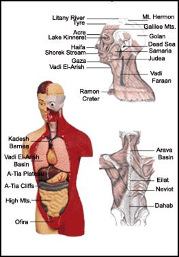 Parallels between the Human Body Organs and the Geographic Regions of the Land of Israel